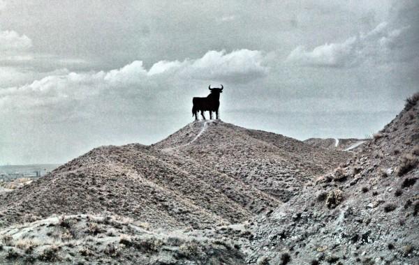 Toro Cerro